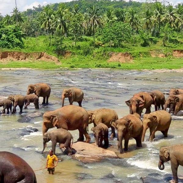Tour Operators in Sri Lanka