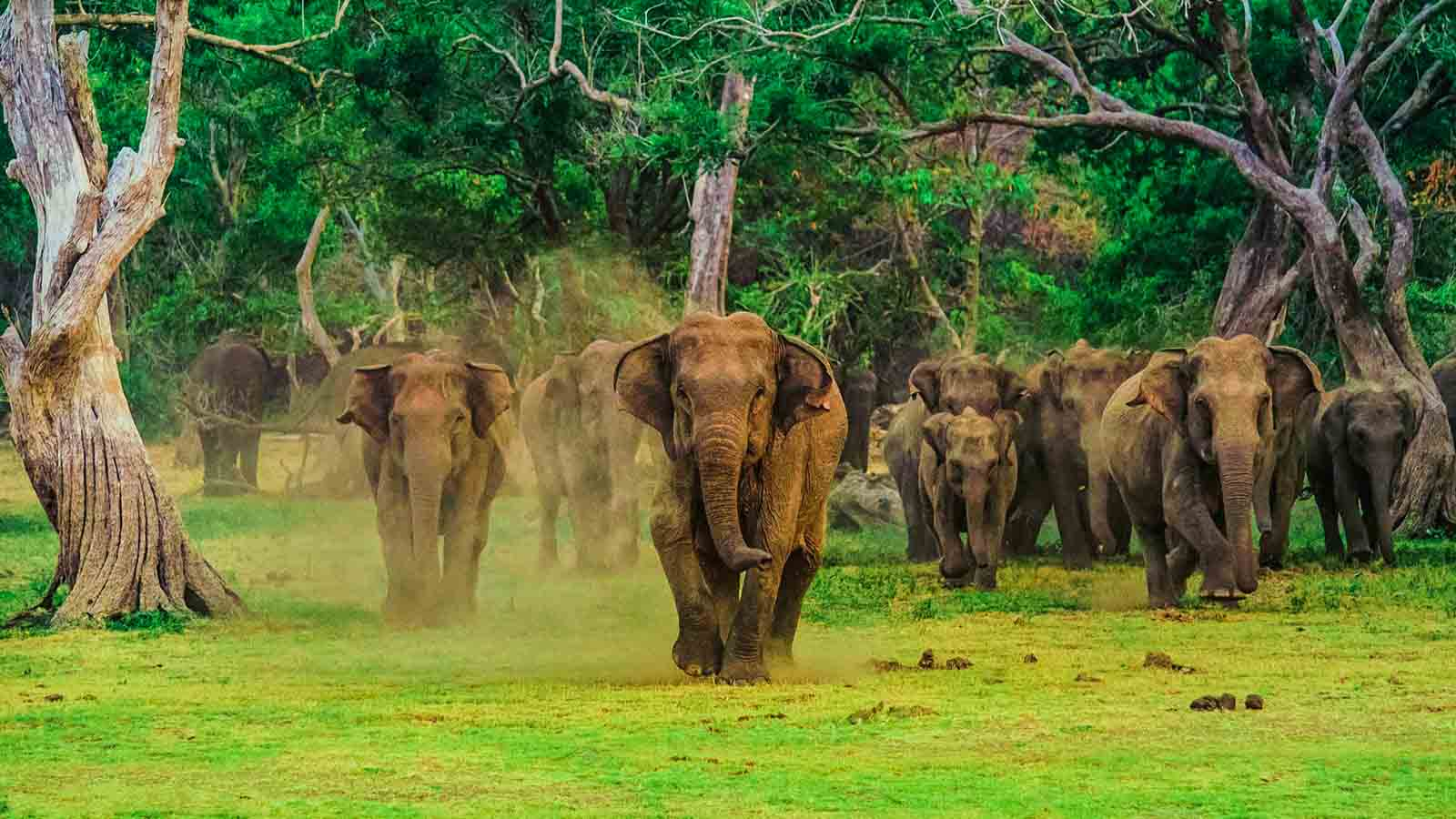 Tourism Companies in Sri Lanka