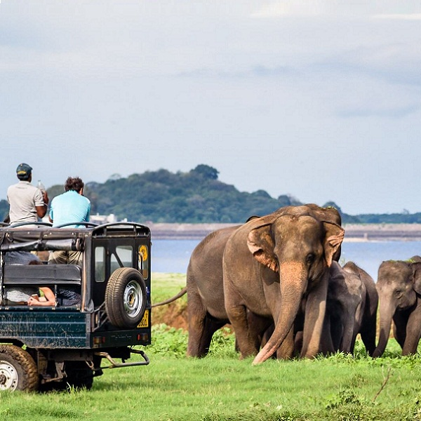 Tour Guides in Sri Lanka